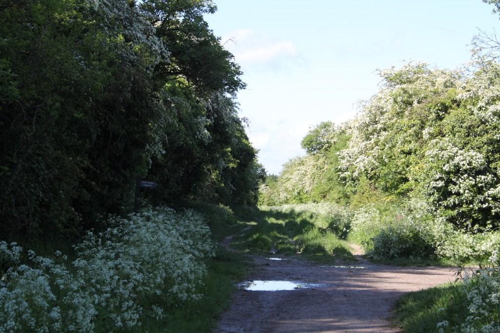 The Ridgeway at Uffington Castle - Archaeodeath