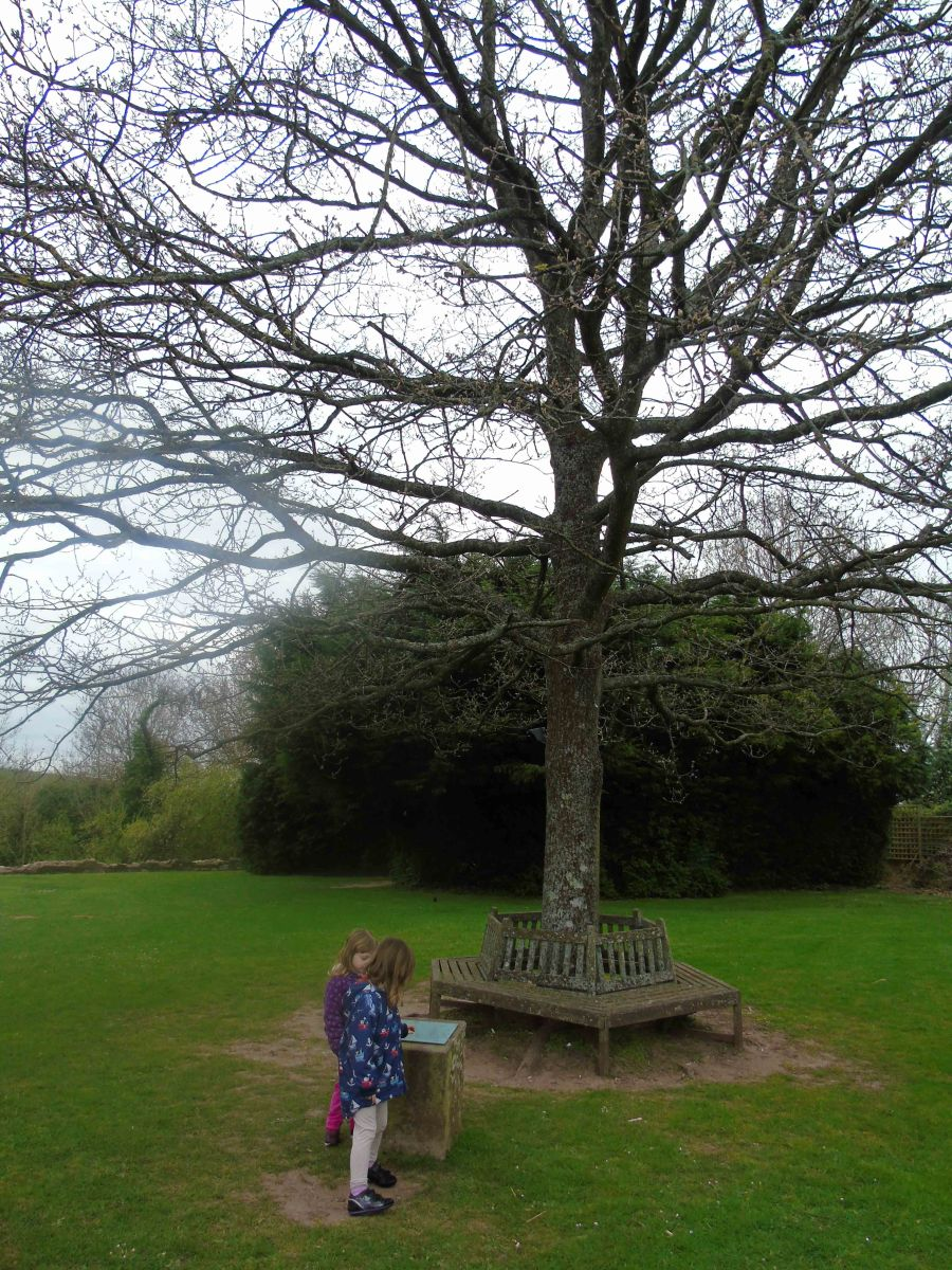 Arboreal Royal Commemoration at Raglan Castle